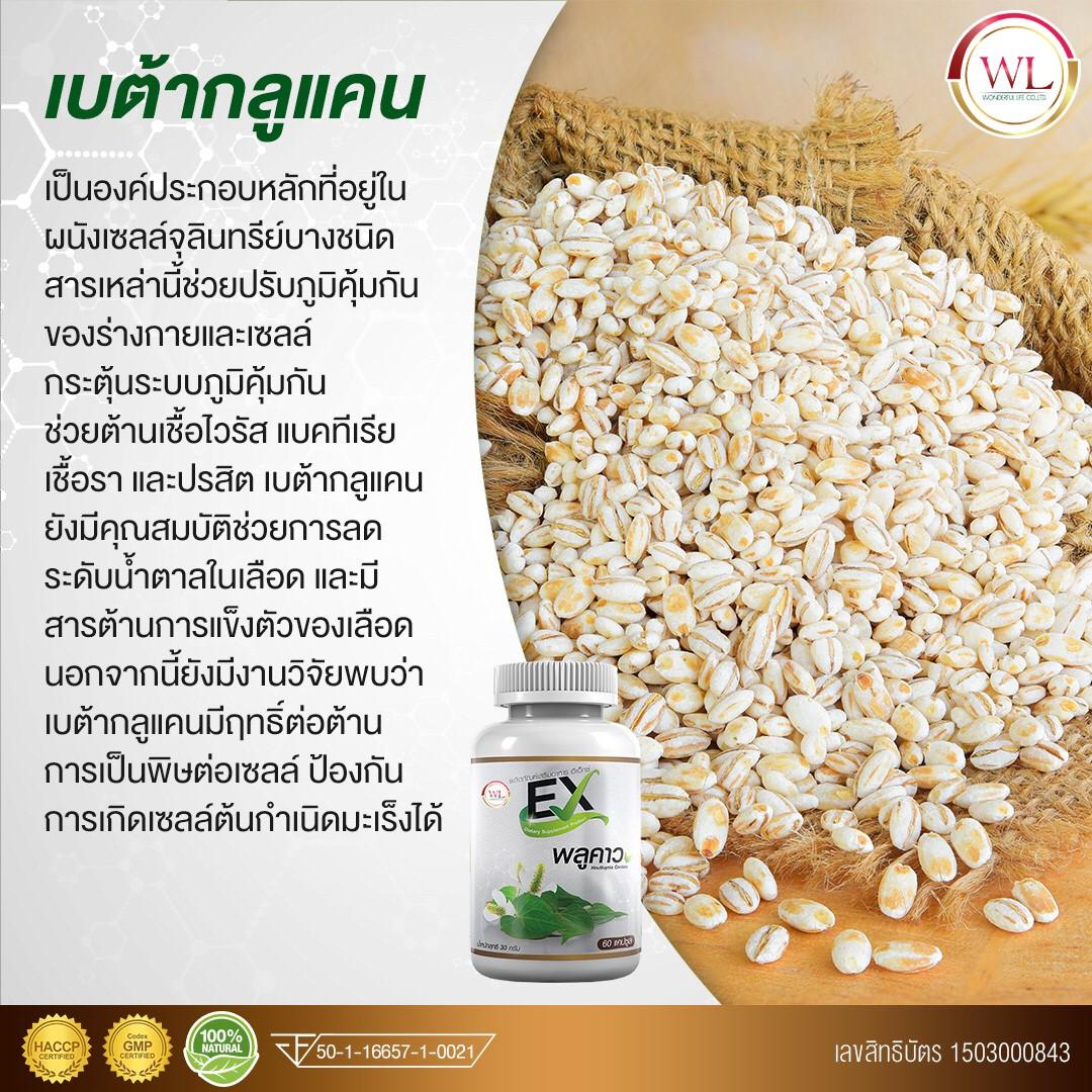 พลูคาว - VIPAuswelllife : Inspired by LnwShop.com